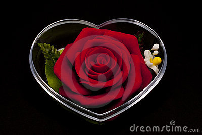 Red rose inclosed in heart shape casing