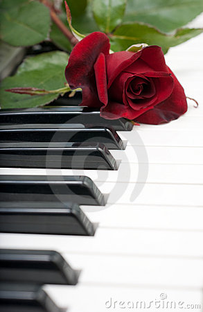 Red rose lies on the piano