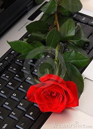 Free Red Rose Lying On Computer Stock Photo - 2447070