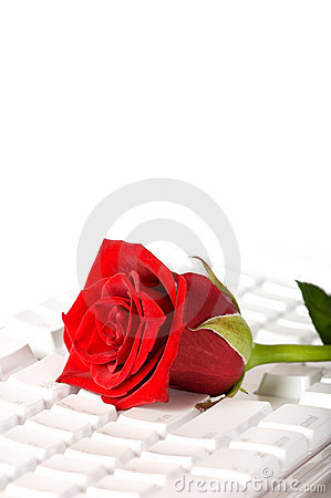 Red rose lying on white keyboard