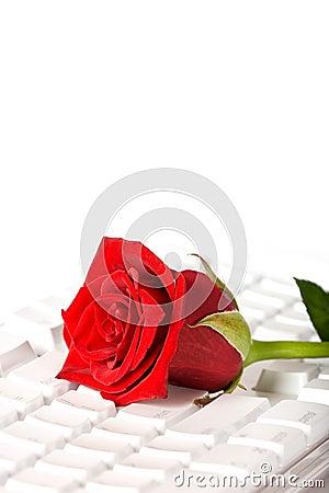 Red rose lying on white keyboard