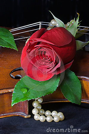 Red Rose, pearls and violin