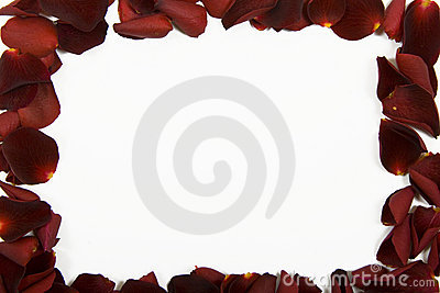 Red rose petal frame