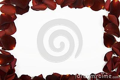 Red rose petal frame