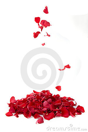 Free Red Rose Petals Royalty Free Stock Photos - 9232028