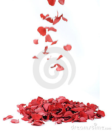 Free Red Rose Petals Royalty Free Stock Photography - 9526267
