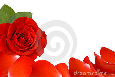 Red rose and petals border