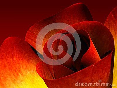 Red rose with petals in form of heart