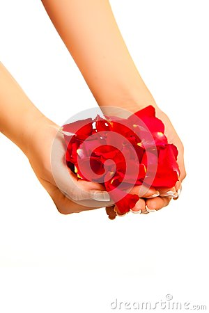 Red rose petals in woman s hand isolated