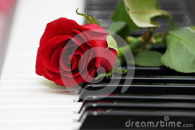 Red rose on piano, love and music