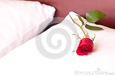Red rose on a pillow