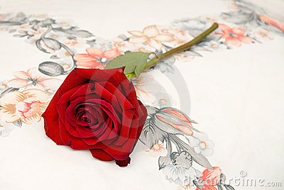 Red rose on pillow