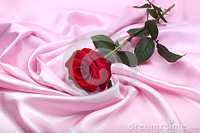 Red rose on pink silk