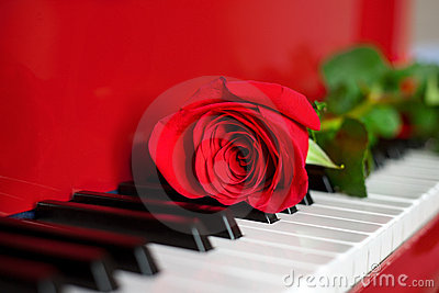 Red rose on red grand piano keys