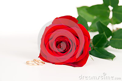 Red rose rests with wedding rings