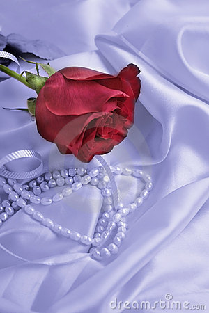 Red Rose On Satin Cloth