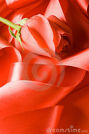 Red rose on satin tape