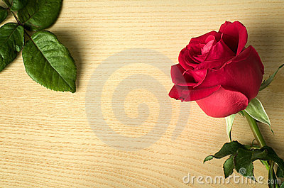 Red rose side on wood and green leaves
