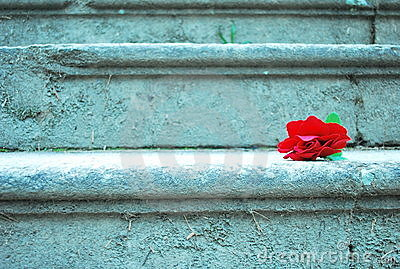 Red rose stairs
