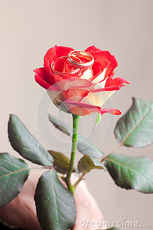 Red rose with two weddings rings