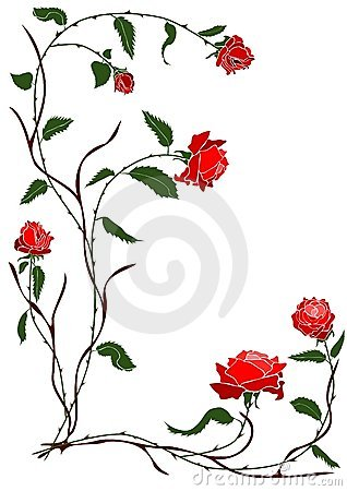 Red rose vine