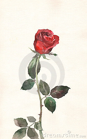 Free Red Rose Watercolor Painting Royalty Free Stock Photography - 4690667