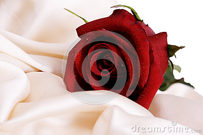 Red rose and white silk