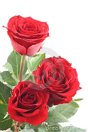 Free Red Roses Royalty Free Stock Images - 3825379