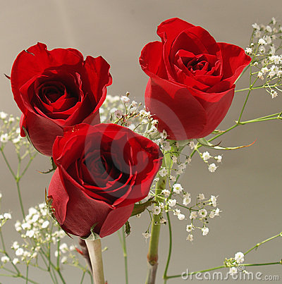 Free Red Roses Stock Photos - 3917613