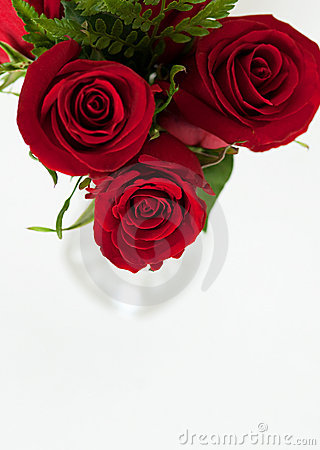 Red Roses from Above