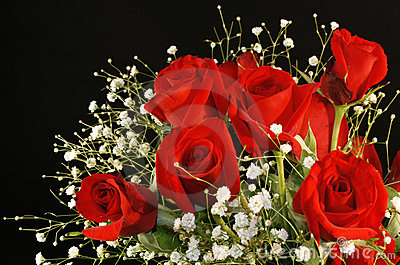 Red Roses and Babies Breath