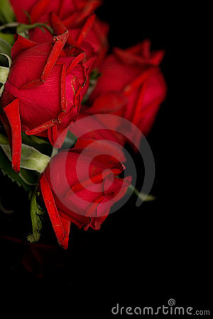 Red roses on black
