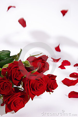 Red roses and falling petals