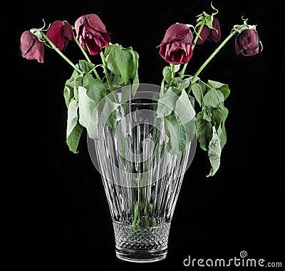 Red Roses Full