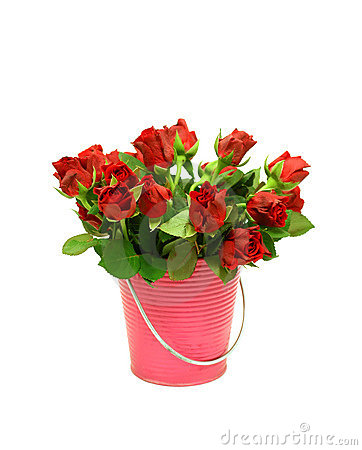Red roses in metal bucket on white
