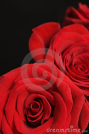 Free Red Roses On Black. Royalty Free Stock Image - 2432326