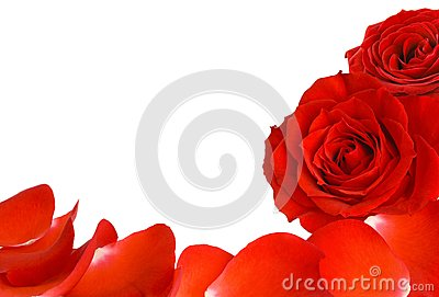Red roses and petals border