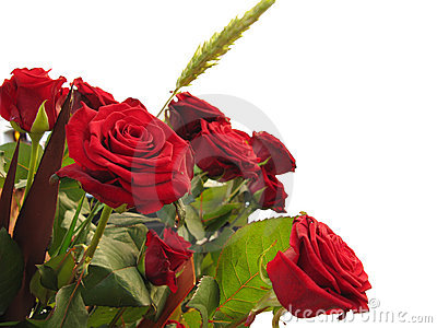 Red roses for a present