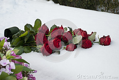 Red roses in the snow on a cemetery