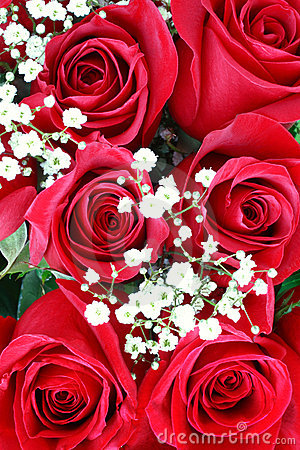Free Red Roses . Valentines Day Royalty Free Stock Photo - 4060215