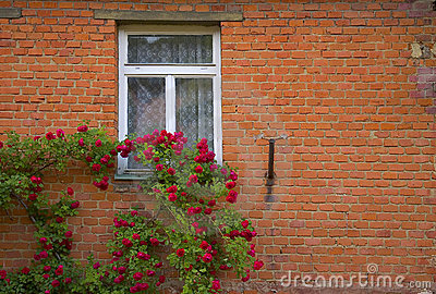 Red roses and wall