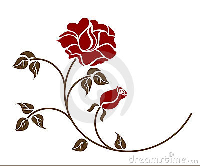 Red roses on the white background