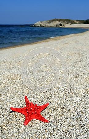 Red sea star on beach