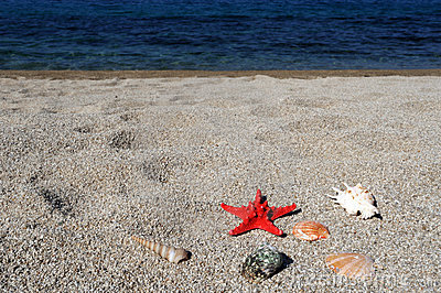 Red sea star and shells on beach