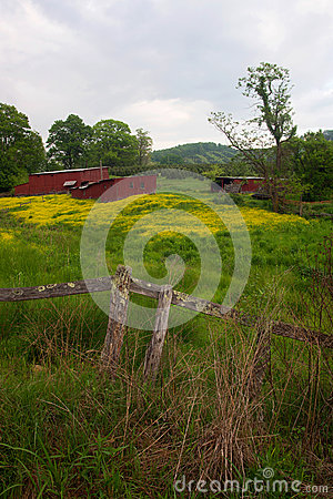 Red sheds in flower field