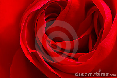 Red silky Rose