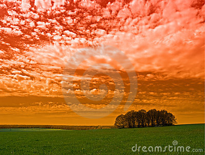 Red sky and trees