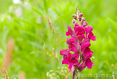 Wild Red And Yellow Vine Flowers | Flowers Forums