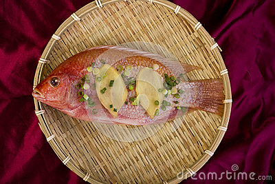 Red Snapper Fish.