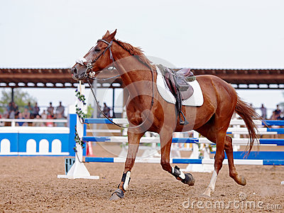 Red sports horse in the field for competitions.